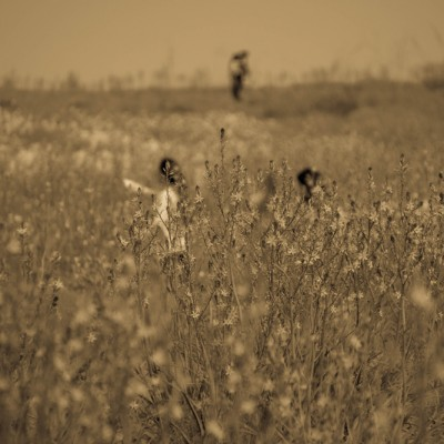 שדה בהרצליה